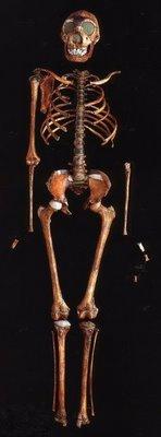 homo erectus skeleton